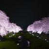 一夜限りの野川の桜ライトアップ