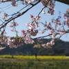 3月の館山はもう春