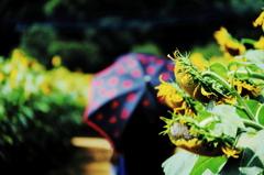 向日葵と夏のアンブレラ