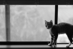 窓辺の楽しみ