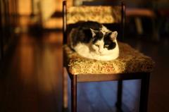 君と君の椅子