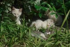 cat family in summer2021