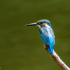 Kingfisher 1800 ②