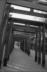 鳥居の参道