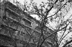 桜モノクローム1
