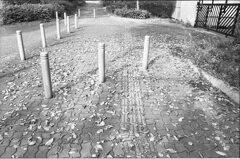 落ち葉歩道