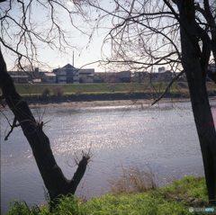 河川敷を歩く~大和川11