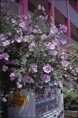 都会に咲く花1