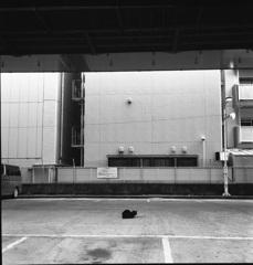センター黒猫