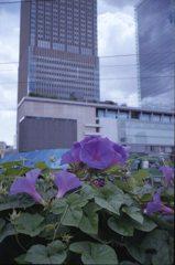 都会に咲く花2