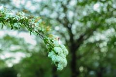 髪飾り  桜の忘れ物