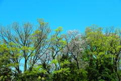 端境期 新緑の候