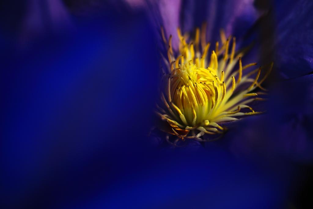 妖しく蠢く蕊たち 魅惑の花芯004