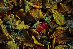 晩秋の山の色