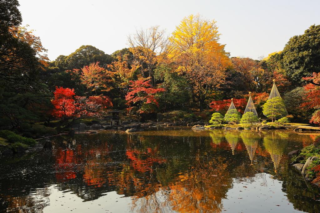 心字池の秋