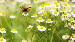切手となった蝶