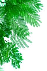 秀逸なナチュラルデザイン  合歓の木の葉