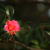 紅侘助 侘び茶の美意識