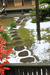 飛び石は既に春の熱を帯びており
