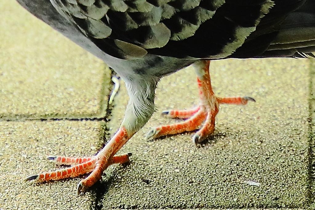 鳥の祖先はやっぱり恐竜か!
