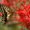 花と蝶19