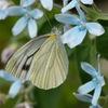 庭の昆虫6