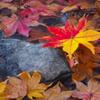 昭和記念公園の秋を散策13