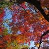 御岳渓谷の秋4