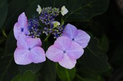 古都の七色花…5
