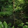 鎌倉名刹の池…