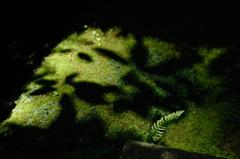 古刹の緑景…3