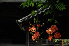 古刹の赤花…4