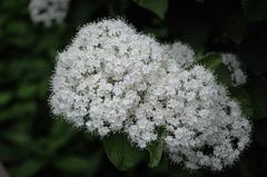 寺庭の和花…1