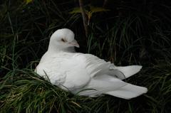 八幡の白模様…3