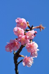 新春の彩り…2