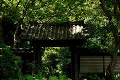 古刹の緑景…1