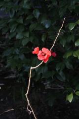 晩秋の赤花…
