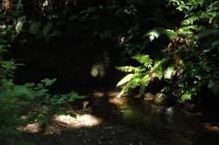 鎌倉・散在が池2…