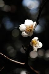 北条の春色…1