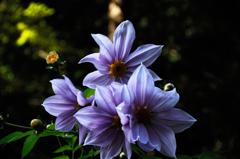 霜月の彩花…3