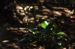 木漏れ日の陰影…5