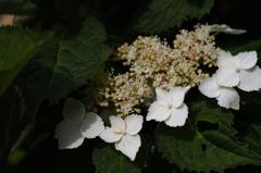 古都の七色花…3