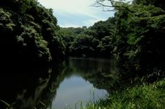 深緑の鎌倉湖…1
