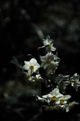 惜別の白小花…