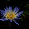 熱帯の妖花…1