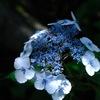 初夏の七変化…2