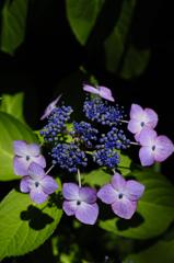 古都の七色花…6
