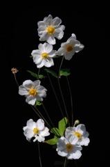 神無月の白花…