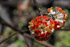 名刹の輝花…2