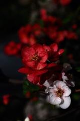 春寺の色分花…2